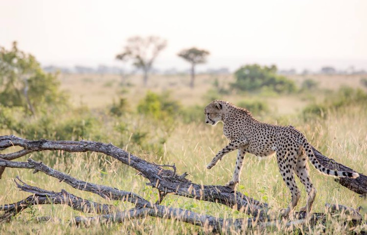 Londolozi by Ryan Rapaport