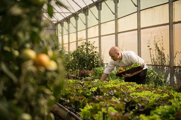 Head Chef of Delaire Graff Restaurant Michael Deg in the estate greenhouse
