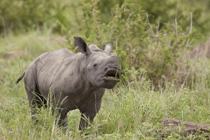 Africa's Attenborough
