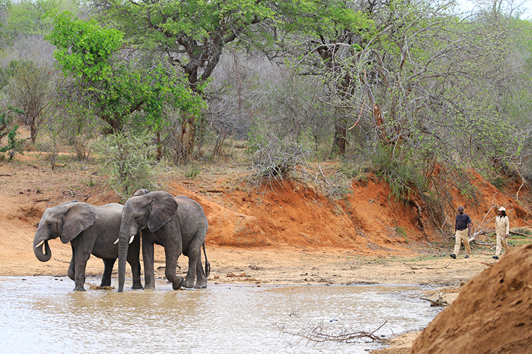 Elephants at Camp Jabulani 4