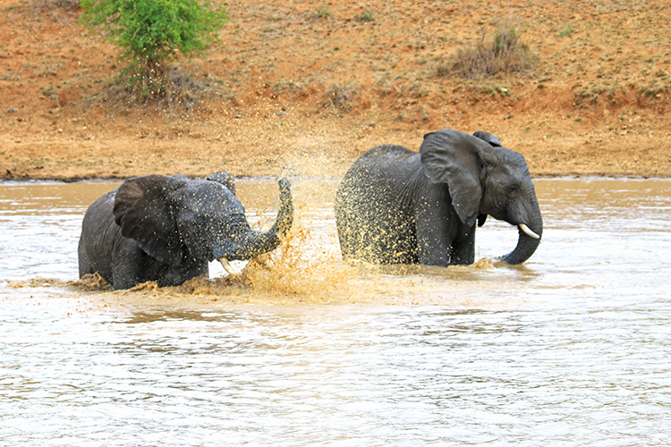 Elephants at Camp Jabulani 6