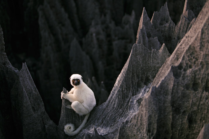 02-lemur-714
