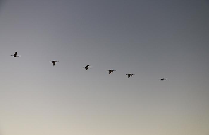 Birds of Bushmanskloof
