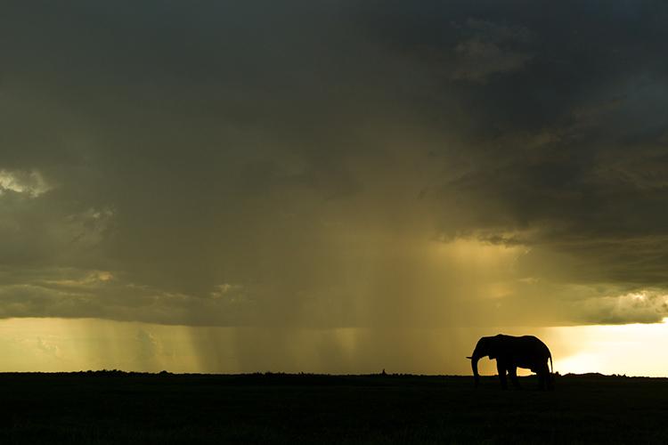 Elephant on the plains