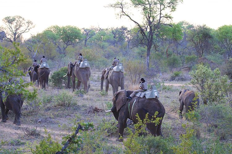 Elephantback Safari