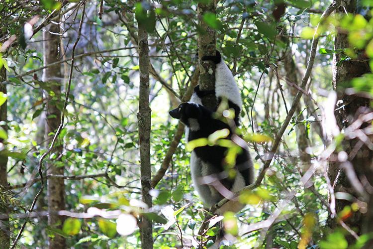 Madagascar 10