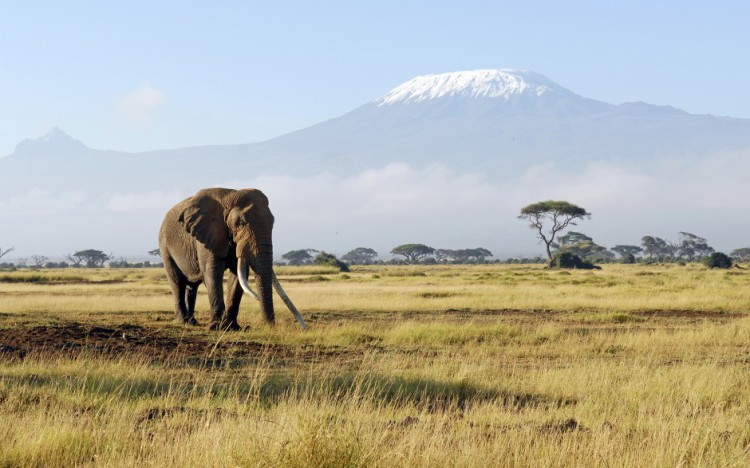 Legendary Kenyan safaris