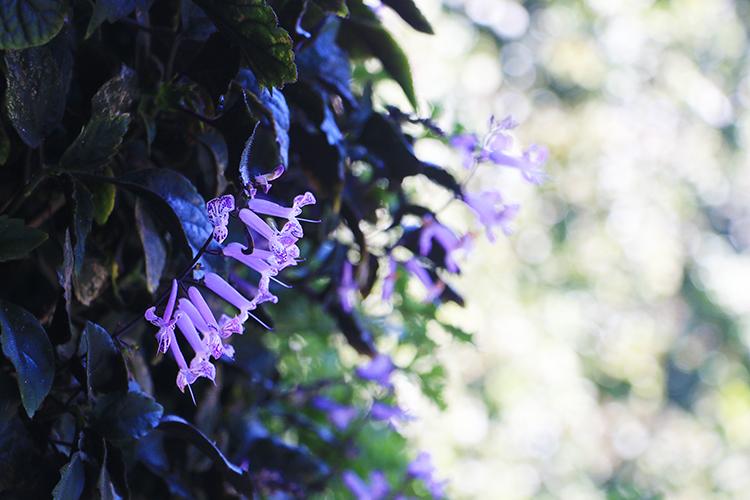 plant-life