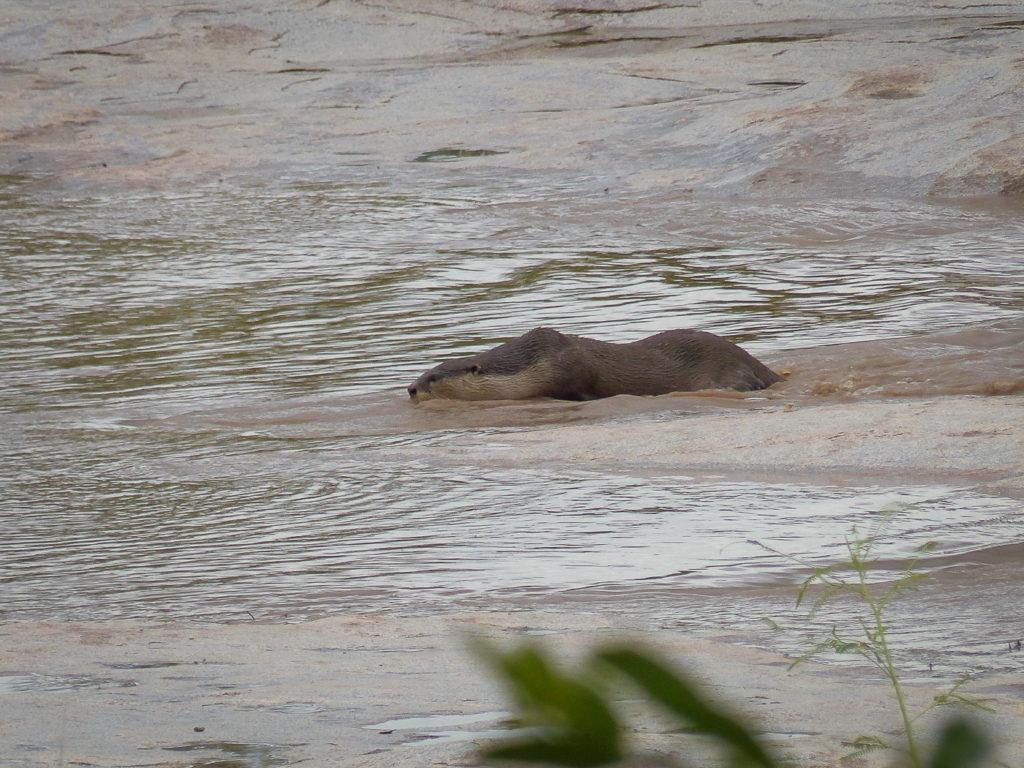 Otter-2-1024x768