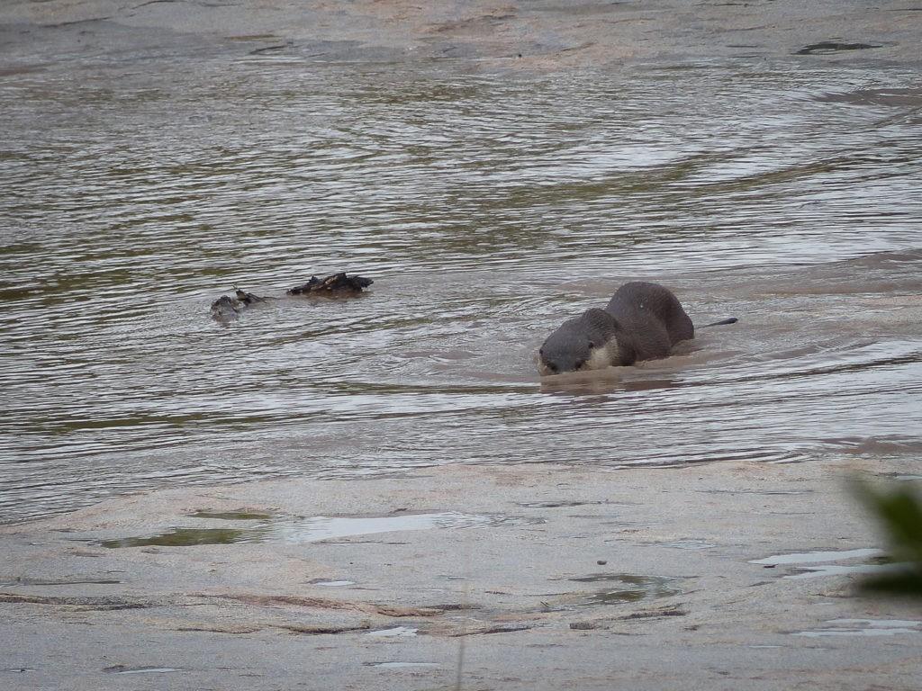 Otter-3-1024×768