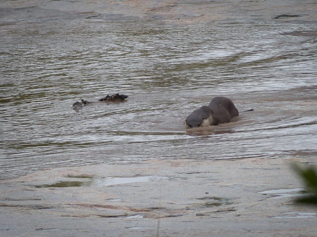 Otter-3-1024x768