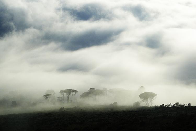 Table Mountain 13